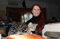 В Туле прошла международная выставка кошек, Фото: 10