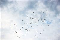 «Мерседес-Бенц» устроил праздник в Центральном парке, Фото: 15