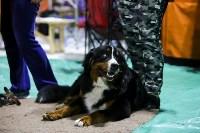 Выставка собак в Туле 14.04.19, Фото: 22