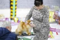 Выставка собак в Туле 14.04.19, Фото: 28