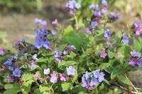 Краски весны в Туле, Фото: 29