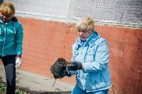 Посадка деревьев во дворе на ул. Максимовского, 23, Фото: 16