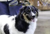 Рейд по выгулу собак в Центральном парке, Фото: 13