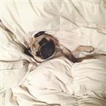 Фотогеничный пес Норм из Сиэтла, Фото: 2