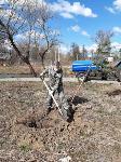 """Акция """"Сад памяти"""" в Баташевском саду, Фото: 3"""