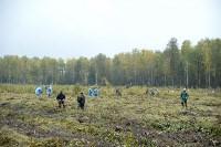 В Веневском районе высажено 24 тысячи сосен, Фото: 5