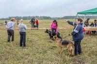 Международная выставка собак, Барсучок. 5.09.2015, Фото: 69