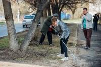 Посадка деревьев во дворе на ул. Максимовского, 23, Фото: 26