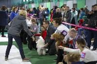 Выставка собак в Туле 14.04.19, Фото: 9