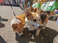 Фестиваль помощи животным в Центральном парке, Фото: 27