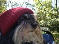Собачья мода, Фото: 7