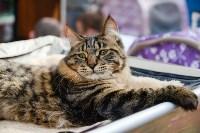 """Выставка """"Пряничные кошки"""" в ТРЦ """"Макси"""", Фото: 88"""