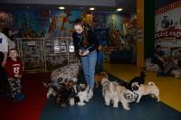 Выставка собак DogLand, Фото: 1