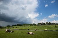 Коровы, свиньи и горы навоза в деревне Кукуй: Роспотреб требует запрета деятельности токсичной фермы, Фото: 31