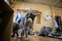 Волонтеры спасли кошек из адской квартиры, Фото: 66