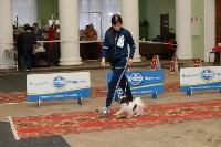 """Выставки собак в ДК """"Косогорец"""", Фото: 3"""
