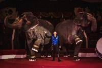«Шоу Слонов» в Тульском цирке, Фото: 27