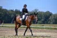 В Ясной поляне стартовал турнир по конному спорту, Фото: 58
