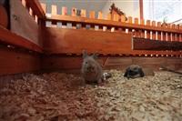трогательный зоопарк, Фото: 4