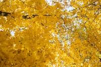 Золотая осень в Туле-2019, Фото: 71