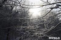 Зимняя сказка Платновского парка, Фото: 2
