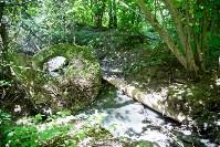 В реку Иншинку несколько лет стекает канализация, Фото: 8
