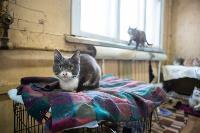 Волонтеры спасли кошек из адской квартиры, Фото: 14