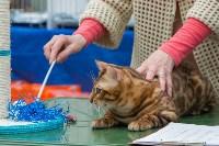 Выставка кошек в Туле, Фото: 29