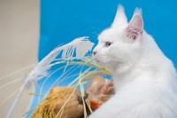 Выставка кошек в МАКСИ, Фото: 71