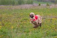 В Туле состоялись собачьи бега, Фото: 6
