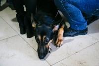 Выставка собак в Туле, Фото: 70