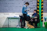 Выставка собак в Туле, Фото: 2
