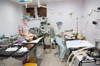 В какой ветеринарной клинике  лечить своего питомца, Фото: 1