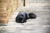 В Новомосковске открылся мини-зоопарк, Фото: 15