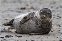 Жизнь тюленя: мечта!, Фото: 7
