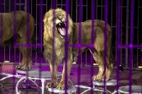Шоу фонтанов «13 месяцев» в Тульском цирке – подарите себе и близким путевку в сказку!, Фото: 71