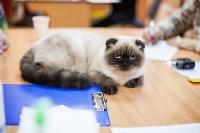 В Туле прошла выставка «Пряничные кошки» , Фото: 90
