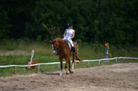 В Ясной поляне стартовал турнир по конному спорту, Фото: 132