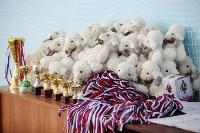 Соревнования «Первые шаги в художественной гимнастике», Фото: 36