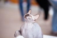 """Выставка """"Пряничные кошки"""". 15-16 августа 2015 года., Фото: 28"""