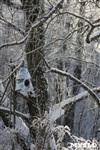 Зимняя сказка Платновского парка, Фото: 3