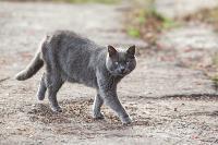 Тульские котики, Фото: 61