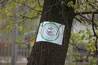 Высадка молодого леса, Фото: 6