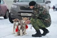 Праздник северных собак на Куликовом поле , Фото: 48