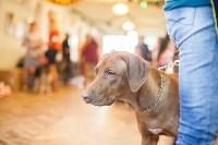 Выставка собак в Туле, 29.11.2015, Фото: 23