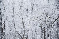Темная сторона Платоновского парка, Фото: 12