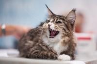 Выставка кошек в МАКСИ, Фото: 6