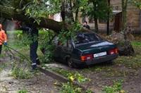 На автомобиль упало дерево, Фото: 9