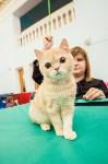 Международная выставка кошек. 16-17 апреля 2016 года, Фото: 46