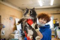 Волонтеры спасли кошек из адской квартиры, Фото: 51